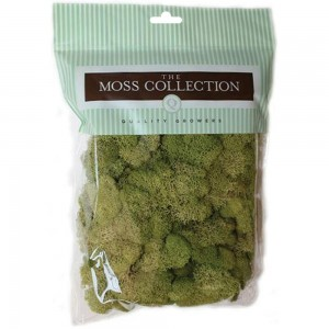 Quality Growers - Spring Green - Preserved Reindeer Moss